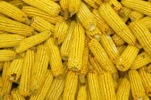 Vorstellung der Nationalen Agrarwirtschaftskammer  NAK